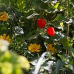 Wilde Blumen auf dem weitläufigen Grundstück