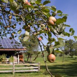 Aus der Ernte wird im Herbst Saft oder Obstbrand gemacht